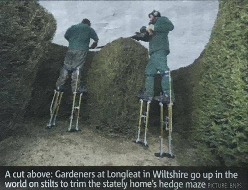 44a. Une taille au-dessus. Les jardiniers du château de Longeat dans le Wiltshire le prennent de haut pour tailler les haies du labyrinthe. Metro. February 1st 2012.@BNPS. IMG_4941_1024